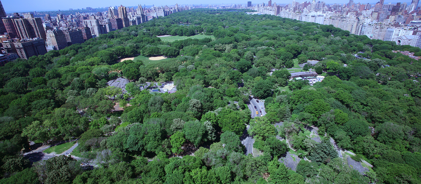 Birds-eye view of summer in central park